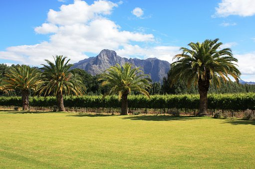 Franschhoek, South Africa, Winery, Palm Trees