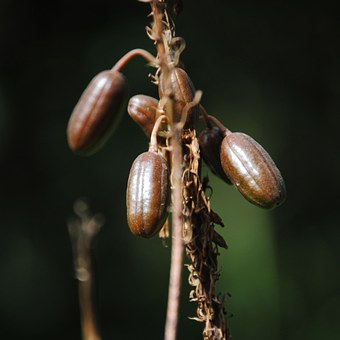 Seeds, Flowers, Plants, Nature, Aloe Vera, Stem, Plant