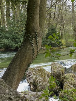 Yew Tree, Yew, Nature, Wilderness, Forest, Tree Trunk