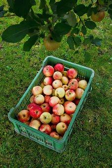 Agriculture, Apple, Autumn, Box, Crop, Fall, Food