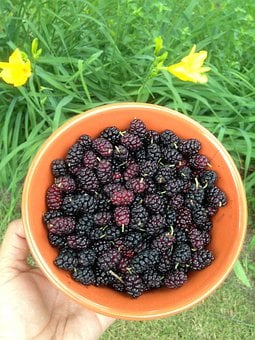 Berries, Mulberries, Bowl, Fruit, Mulberry, Food, Sweet
