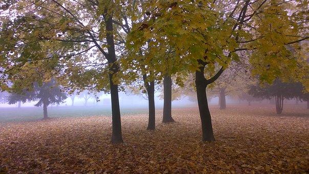 Autumn, Agricultural Logistic, Nature, Landscape