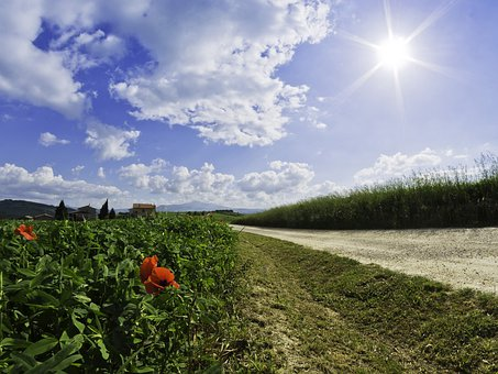 Roads, Poppies, Flowers, Tuscany, Tuscan Landscape