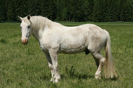 White Horse, Summer, Horse Feed