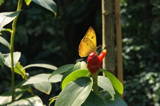 Yellow, Kwita, Nature, Insect, Butterfly, A Little