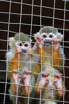 Monkey, Nagasaki Bio Park, Zoo, Brothers And Sisters