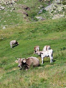 Cow, Calf, Cattle, Bovine, Landscape, Grass, Nature