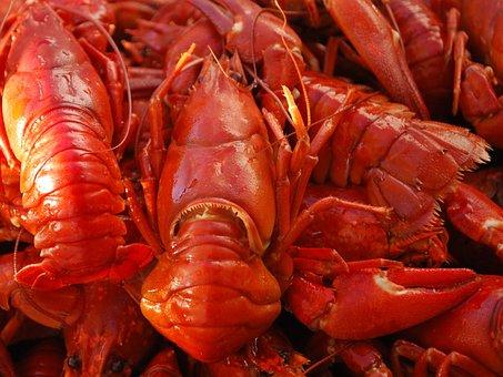 Crayfish, Food, Seafood, Claw, Fresh