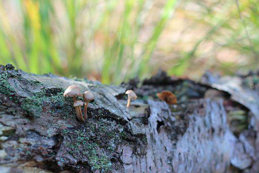 Forest Floor, Mushrooms, Tree Fungus, Forestnature