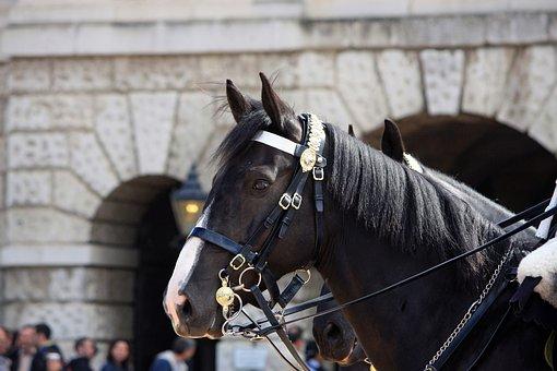 Horse, Portrait, Household Cavalry, Royal, London