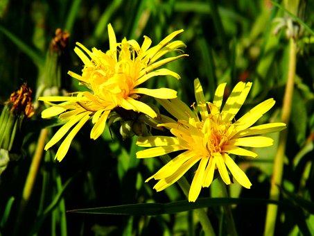 Flower, Lomo, Dandelion Field
