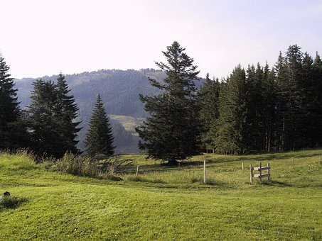 Oberstaufen, Steibis, Upper Rose Alp, Nature, Mountains