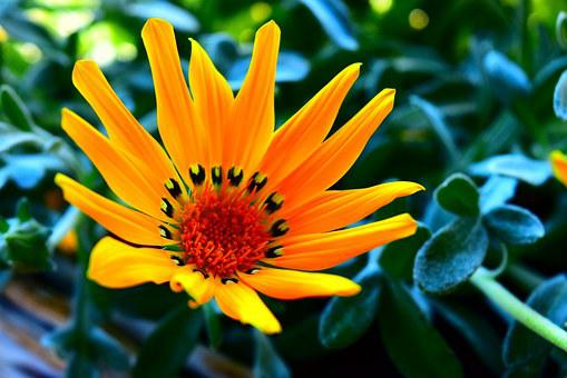 Flower, The Midday Sun, Nature