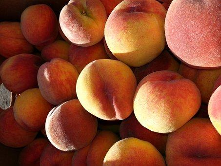 Peaches, Fruit, Tree-ripened, Ripe, Nature, Harvest