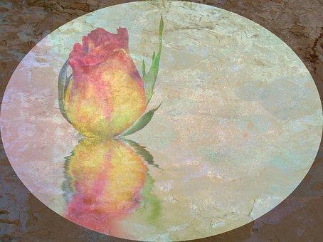 Rose, Blossom, Bloom, Sublime, Noble, Flower, Plant
