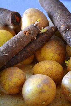 Potato, Salsify, Vegetables, Food, Eat, Raw, Vitamins