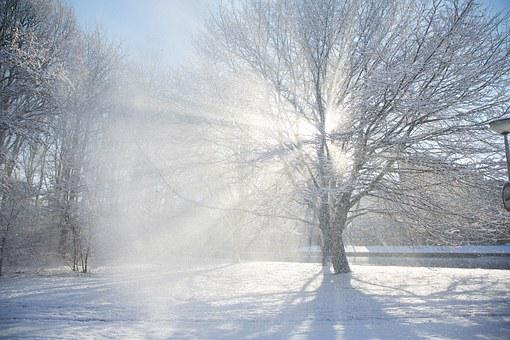 Trees, Tree, Snow, The Winter, Sun, Shining