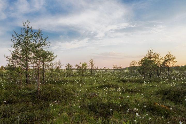 Estonia, Landscape, Scenic, Sky, Clouds, Trees, Plants