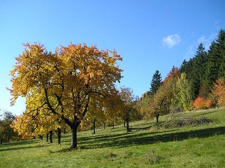 Autumn, Tree, Jizera Mountains