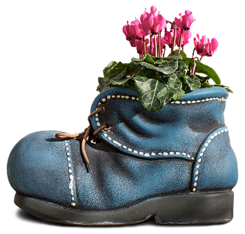 Cyclamen, Flower, Pink, Nature, Blossom, Flora, Plant