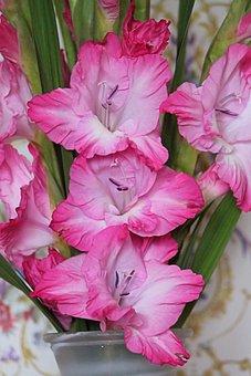 Gladiolus, Gladiolenblüten, Red White