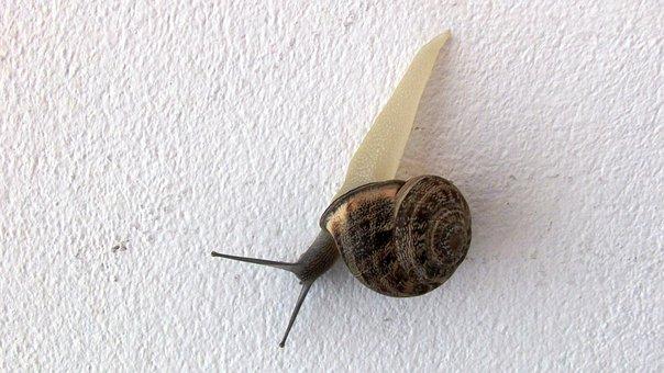 Snail, Wall, Visitor, Intruder