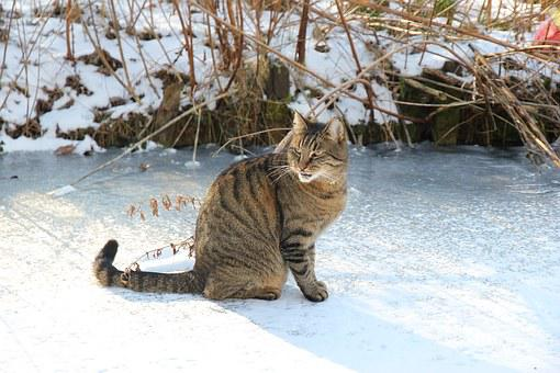 Hangover, Cyper, Pet, Cat, Winter, Ice, Snow