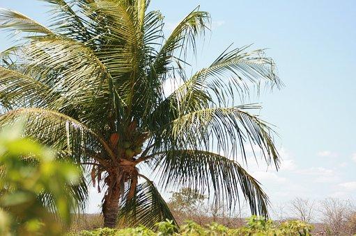 Aracaju, Beach, Afternoon