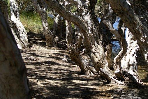 Mangrove, Beach, Nature, Tree, Landscape, Ocean