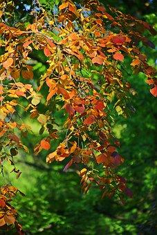 Autumn, Beauty, Dere, Tree, Nature, Trees
