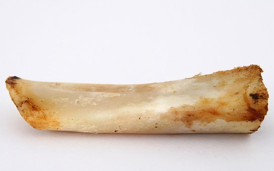 T Bone Gristle, Gristle, Animal, Beef, Bone, Canine