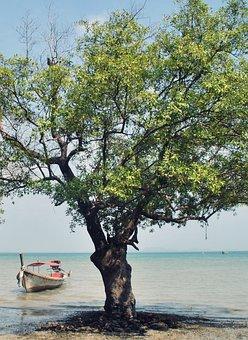 Mangrove, Boot, Sea, Asia, Ship, Thailand, Booked
