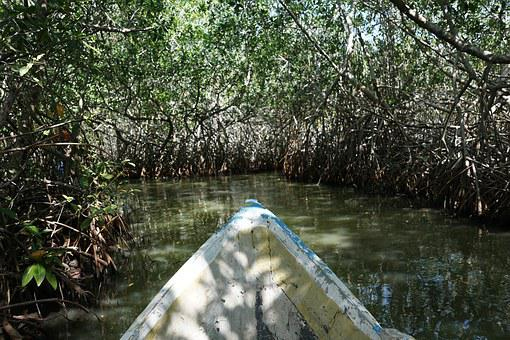 Mangroves, Forest, Colombia, Trees