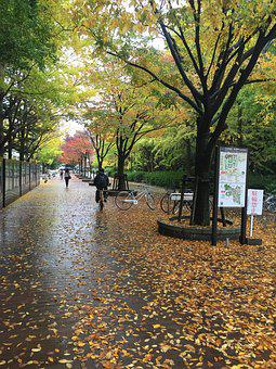 Osaka University, Toyonaka Campus, Fall, Autumn, Japan
