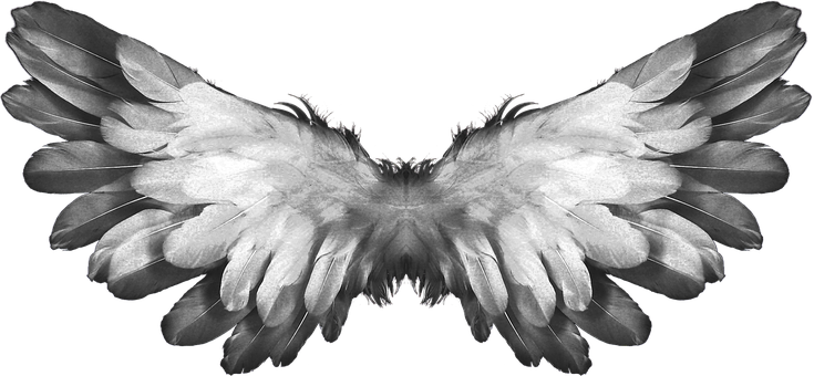 Angel, Wings, Feather, Heaven, Angel Wings, Religion