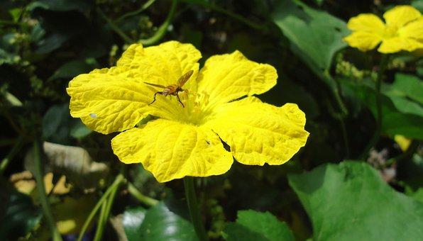 Pumpkin Blossom, Flower, Nature, Day, Green, Sunny