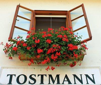 Looking Up, Window, Outlook, Flower, Facade