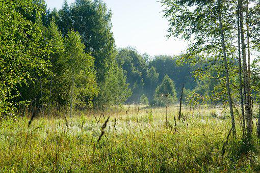 Forest, Summer, Nature, Wild Wood, Sunny Day, Trees