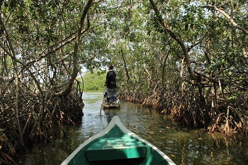 Colombia, Mangrove, Nature, Caribbean, Green, Swamp