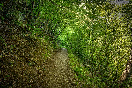 Nature, Forest, Path, Green, Mountain, Natural