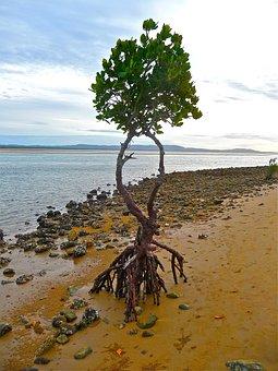 Isolation, Mangrove, Tree, Environment, Conservation
