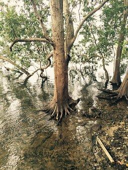 Mangrove, Swamp, Nature, Tree, Tropical, Ecosystem