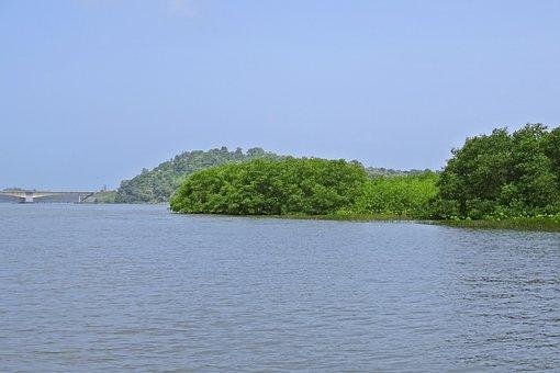 Forest, Mangroves, Estuary, Kali, River, Tropical