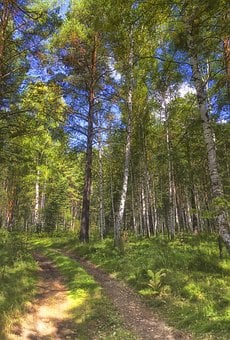 Summer, Forest, Road, Nature, Grass, Tree, Sunny Day