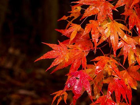 Japan, Kumamoto, Oguni, Valley, Autumn, Leaf