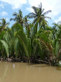 Vietnam, Mekong River, Mekong Delta, River, Palm