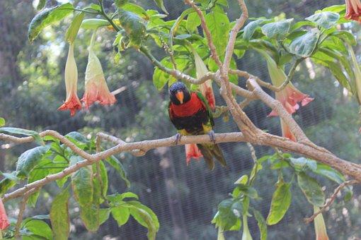 Parrot, Bird, Animal, Nature, Pet, Cute, Park, Color