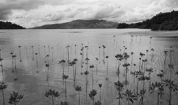 Philippines, Subic, Mangrove, Landscape, Tropical