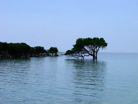 Mangroves, Water, Shallow Water, Tree, High Water