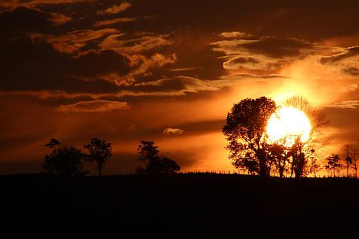 Sunset, Dramatic, Orange Sky, Silhouetts Tree